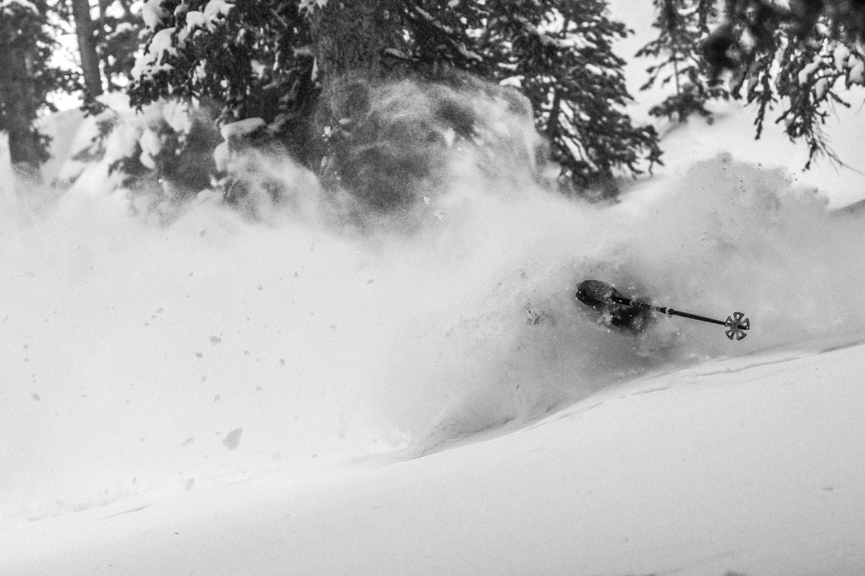 Marcus Caston Skiing Powder at Snowbird Photo: Jay Dash