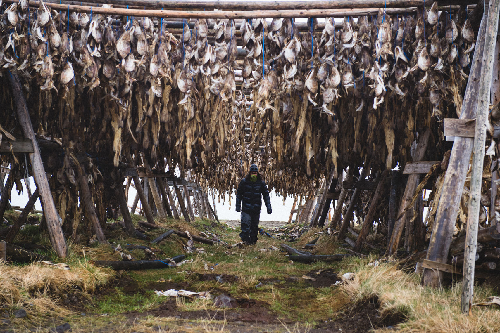 Dried Fish Photo: Mike Schirf